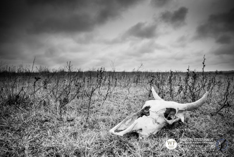©_SKUA_WILDPIX_Ultima_Frontera_jan_2015_Martin_Steenhaut_145