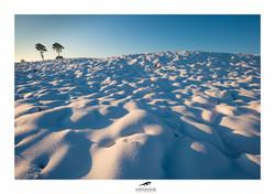 281214_Heide-sneeuw_0127-web.jpg