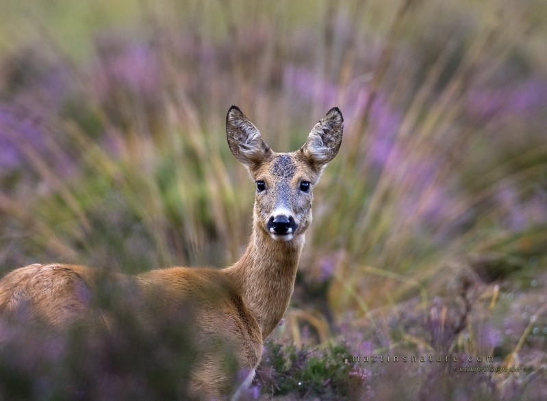 Best+of+Mammals+014.jpg