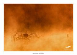 Morning-Musk-Rat-©-Martin-Steenhaut