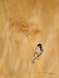 Best+of+Birds+036.jpg