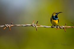 Best+of+Birds+083.JPG