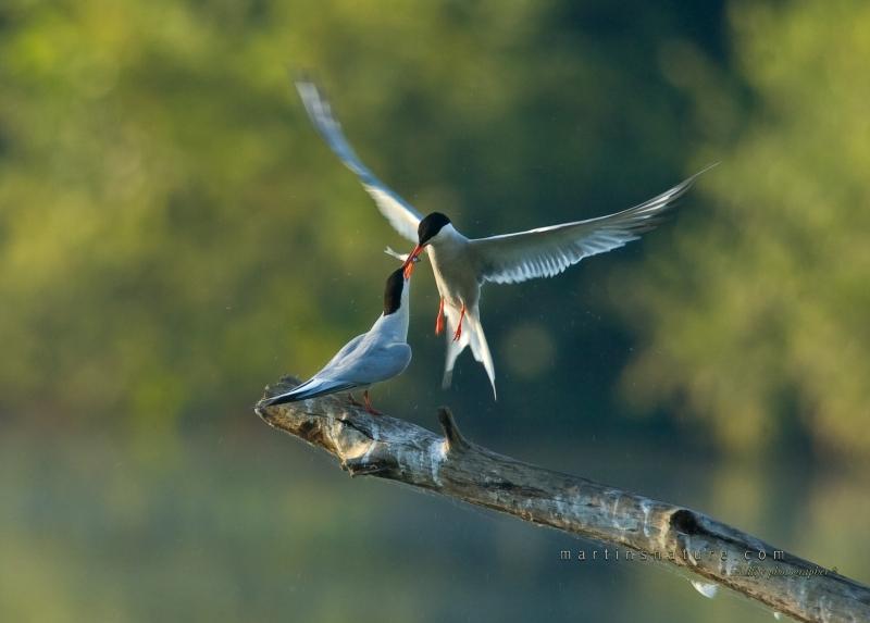 Best+of+Birds+047.jpg