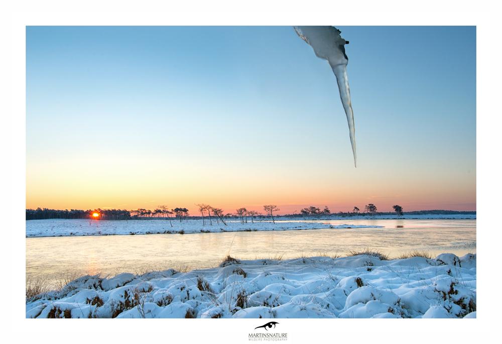 Sneeuw-heide-dec2014web.jpg