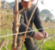 vinhos douro verd