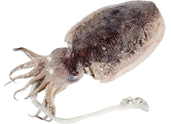 Big cuttlefish大墨鱼/kg