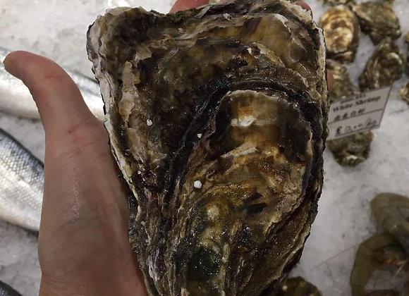 Jumbo Oyster 超大生蚝/Each