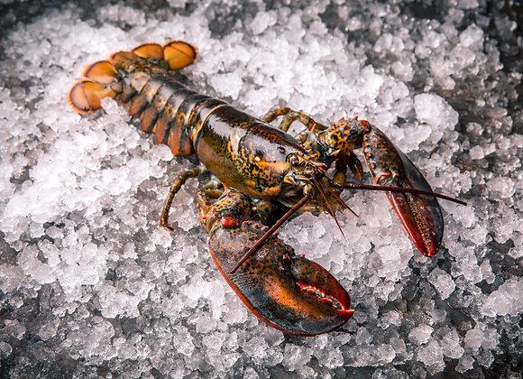 Lobster 龙虾 /只 约500g