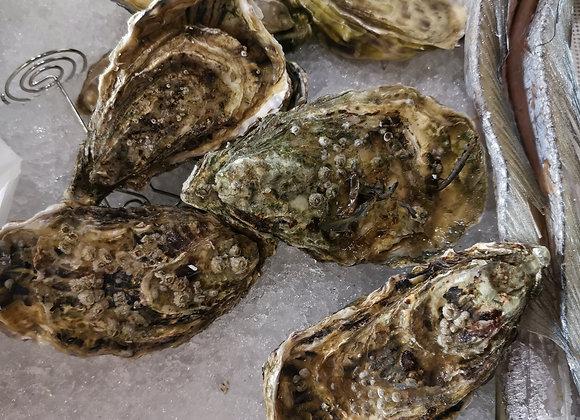 Oyster 生蚝/each