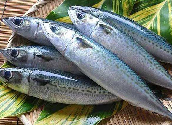 Mackerel鲅鱼 450g-490g/Each