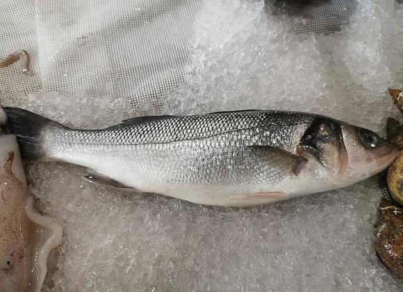 SeaBass 大鲈鱼/each  500-600g
