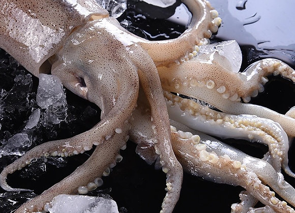 Big squid大鱿鱼/kg