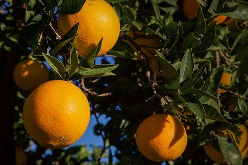 The Love for Three Oranges by Mark Billen