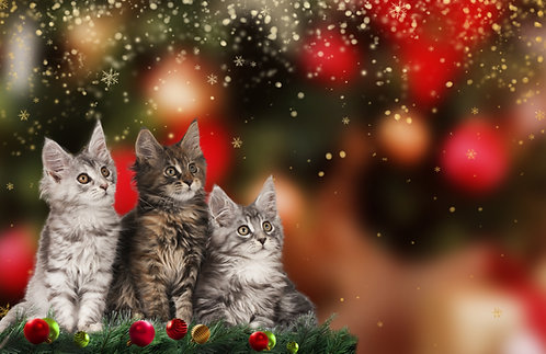 Three Cats for Christmas by Kathleen Maule Holen