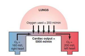Methods For Measuring Cardiac Outputs