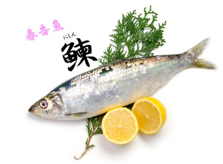 ★春を告げる魚②★ ニシン蒲焼