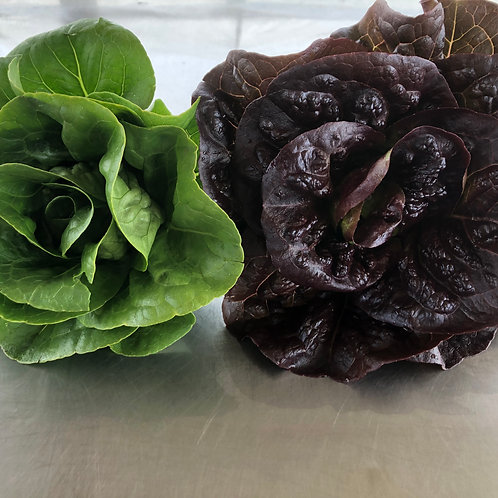 """Red and green """"Little Gem"""" mini romaine lettuces"""