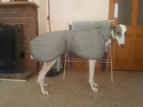 Elitehound Australia   Greyhound Coats