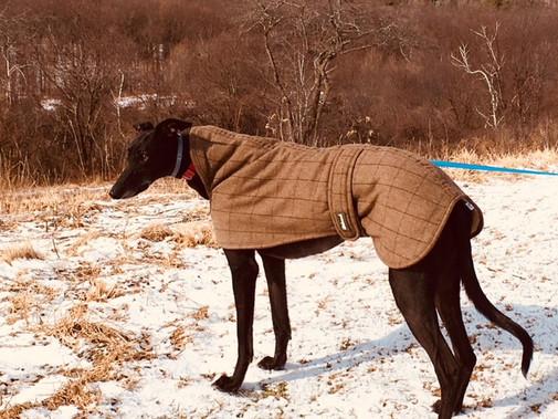 Luxurious Greyhound Coat