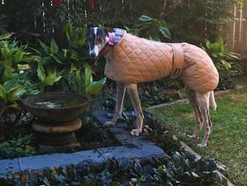 Beige greyhound coat.jpg