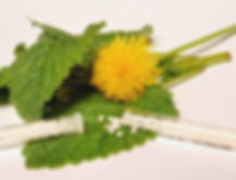 homeopathy-leaves-tablets.jpg