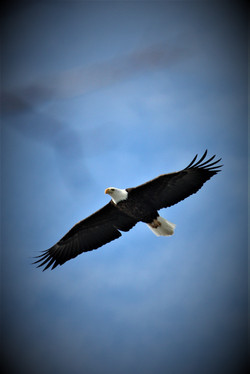 eagle viewing