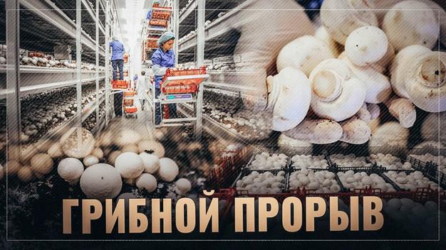 Грибной бум: Россия совершает очередной прорыв.
