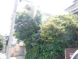今回は町田市のお客様で伐採です。