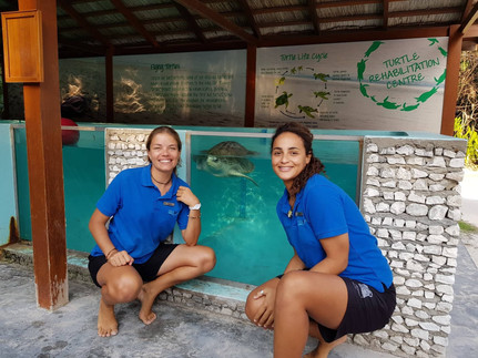 Turtle sanctuary Maldives Carla and Audr