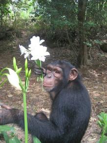 chimp 6.jpg