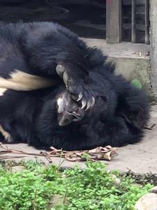 Bear paw sleeping.JPG