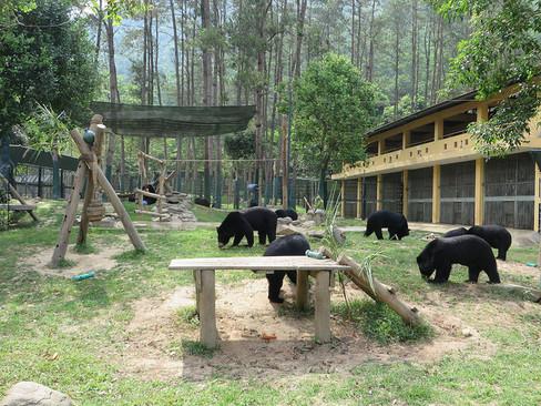 vietnam bear sanctuary.jpg