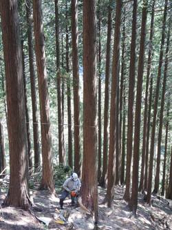 明治時代から、森林を大切に管理
