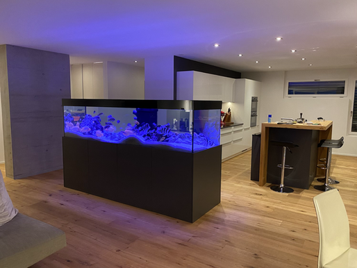 250x80x70 Malawi Aquarium
