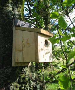 One of our many nest boxes