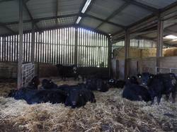 Our cattle barn