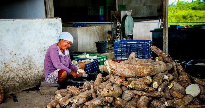 Indonesia_Casava_2-cropped.jpg