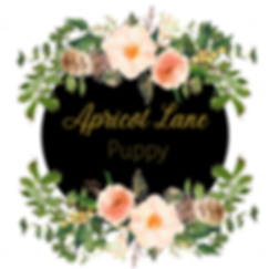Apricot%20Lane_edited.png