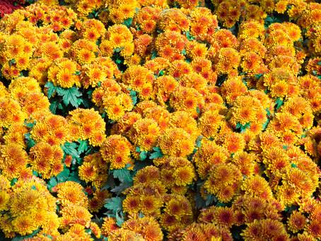 October's Birth Flower: