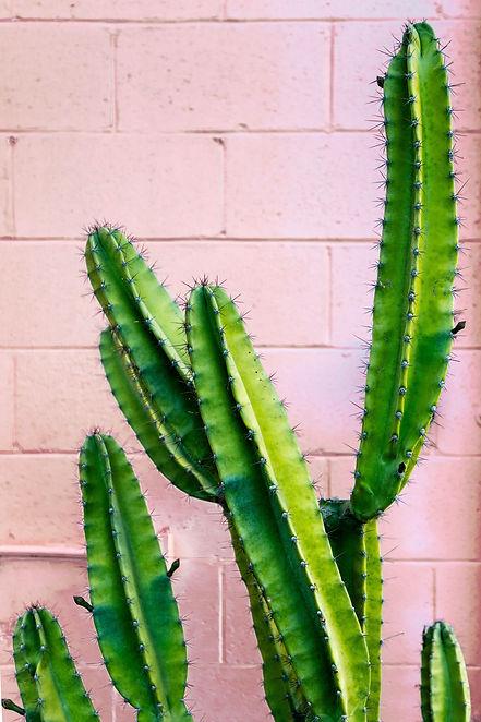 nelson-flores-y_yKkAYsQRQ-unsplash.jpg