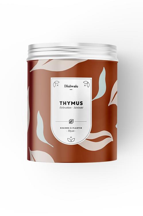 KIT DE GRAINES- THYMUS