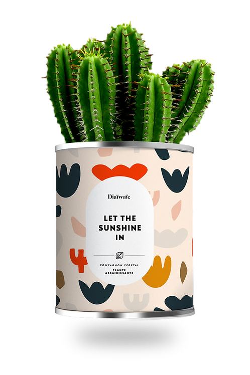 LET THE SUNSHINE IN - CACTUS