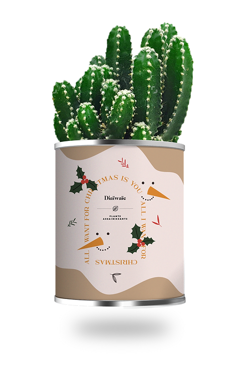 ALL I WANT FOR CHRISTMAS IS YOU - CACTUS