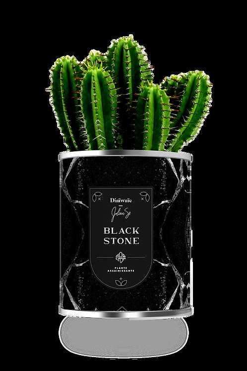 BLACK STONE - CACTUS x julien sz