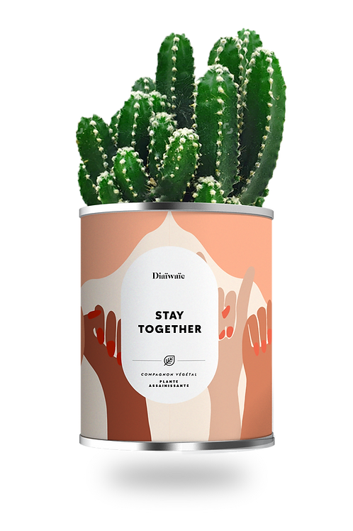 STAY TOGETHER - CACTUS