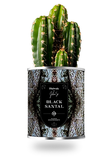 black santal.png