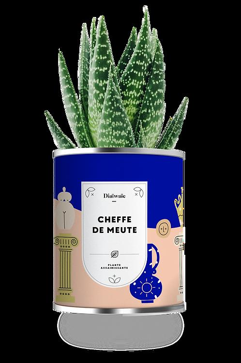 CHEFFE DE MEUTE