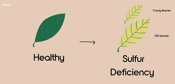 Sulfur deficiency for plants