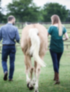 horse couple.jpg