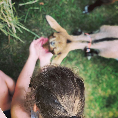 Goat Kids.jpg
